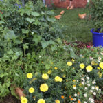 How Does Your Garden Grow? A Mid-Summer Update