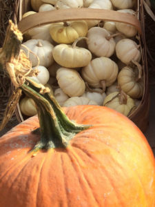 Celebrating fall with pumpkins and compost!