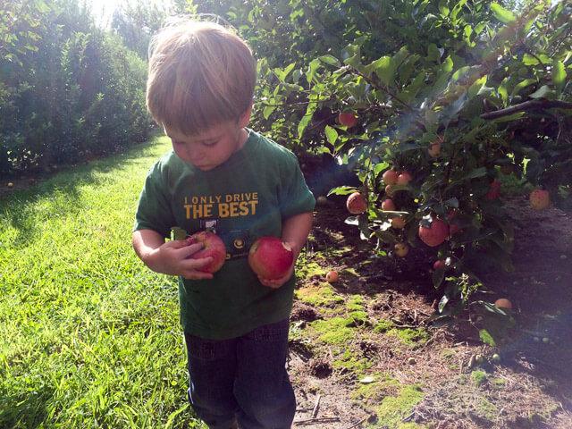 fall-garden-checklist-15