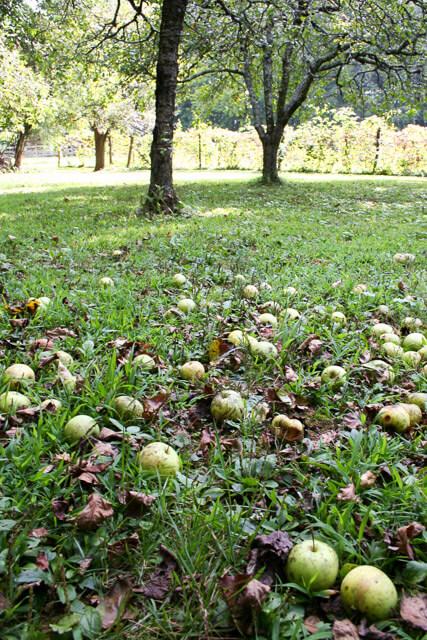 fall-garden-checklist-3532