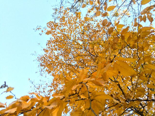 fall-garden-checklist-8989