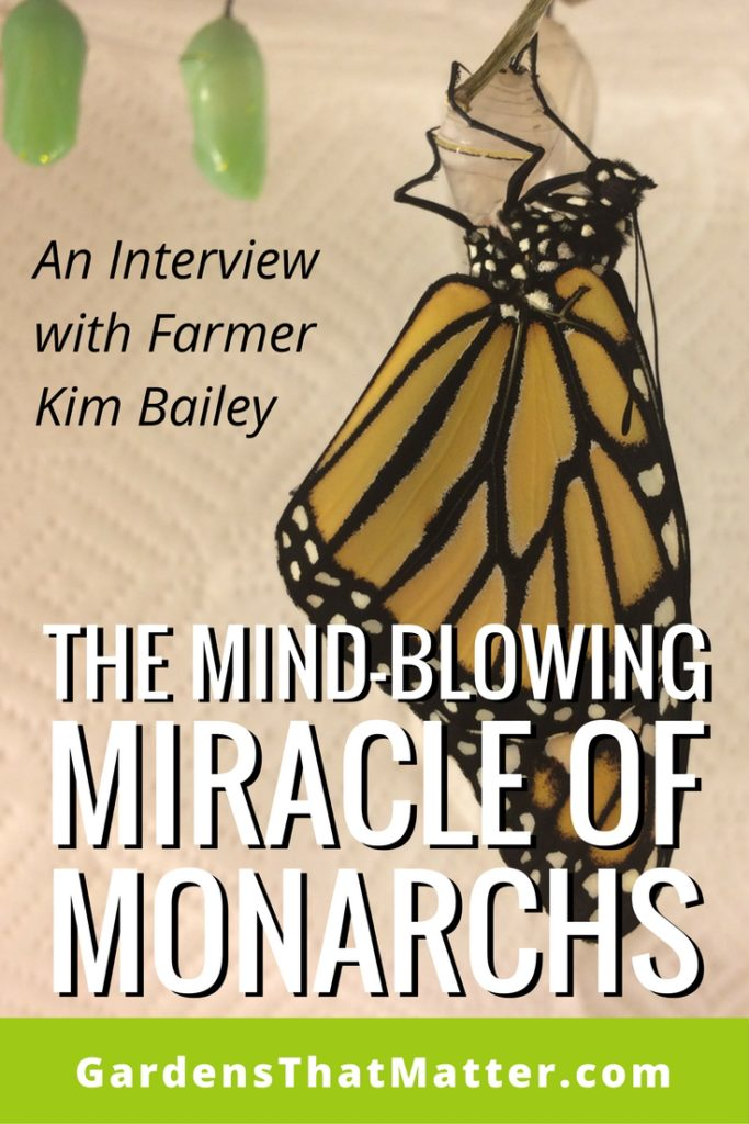 The Mind Blowing Miracle Of Monarchs