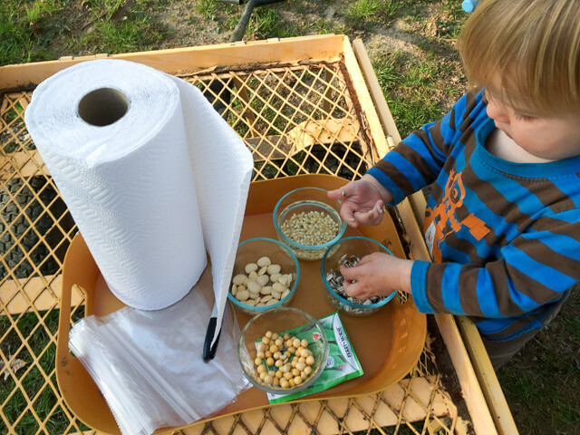 Gathering supplies to test germination rates of old seeds