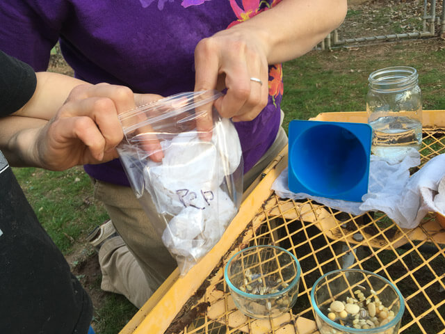 Testing old seeds - putting rolls into a bag