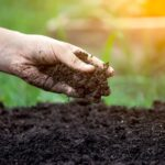 The 7 Healthy Soil Habits (and How They Can End Garden Battles)